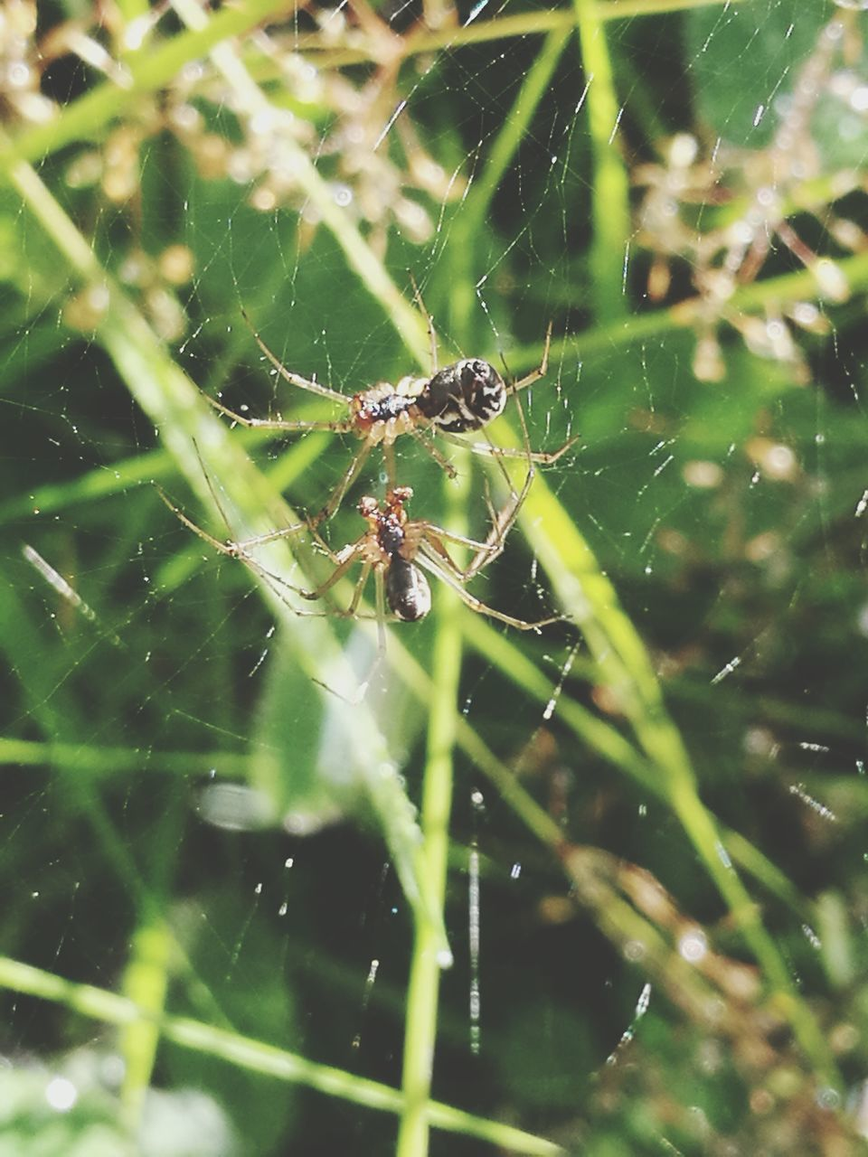 spider, spider web, one animal, animals in the wild, animal themes, insect, web, survival, close-up, focus on foreground, nature, outdoors, day, animal wildlife, no people, full length, fragility