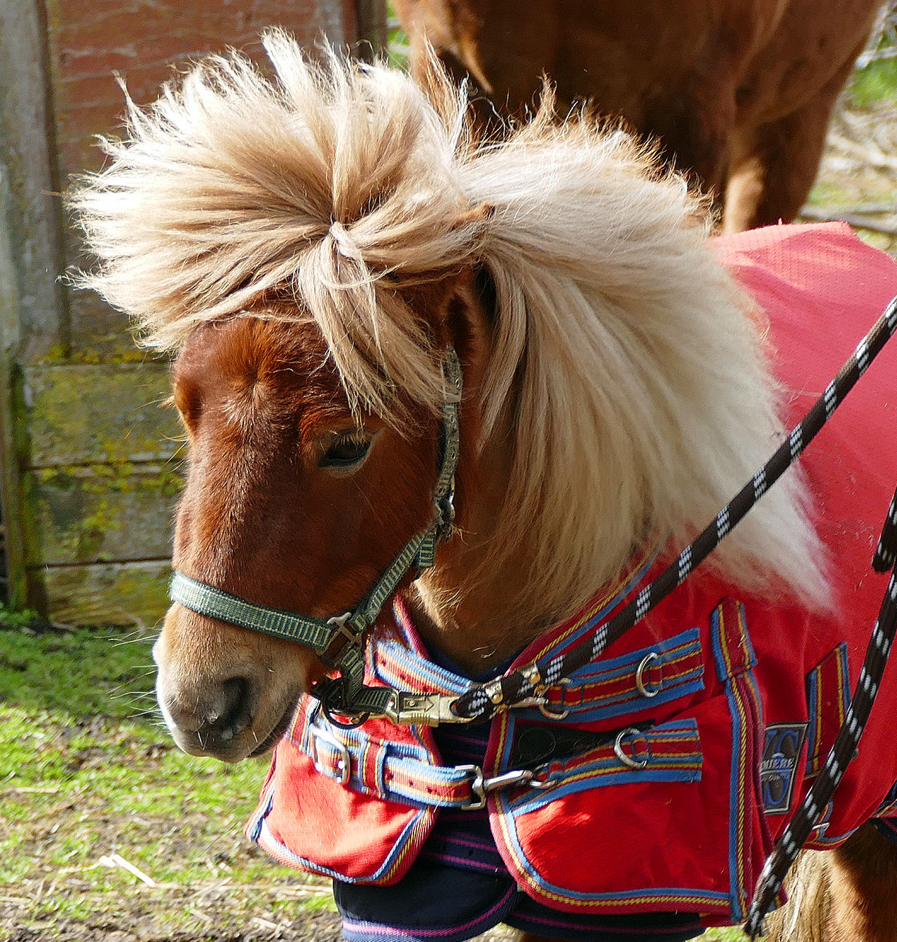 Animal Hair Animal Themes Bridle Brown Close-up Day Domestic Animals Grass Horse Livestock Mammal Mane Nature No People One Animal Outdoors Working Animal