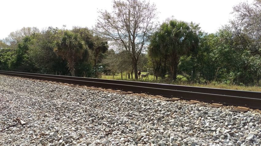 Beauty In Nature Day Diminishing Perspective Growth Nature No People Outdoors Railroad Track Railway Track Sky Surface Level The Way Forward Tranquil Scene Tranquility Tree Vanishing Point