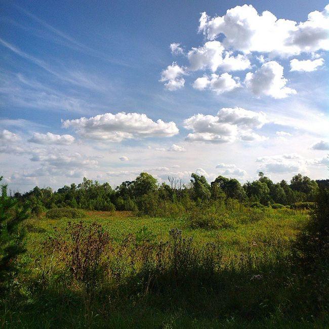 Russia Summer Sky Bluesky Landscape Sun Sunday Nofilter Россия поле русскоеполе просторы небо небоголубое лето Хорошо красиво Green облака облако Clouds Skyscraper Skyporn
