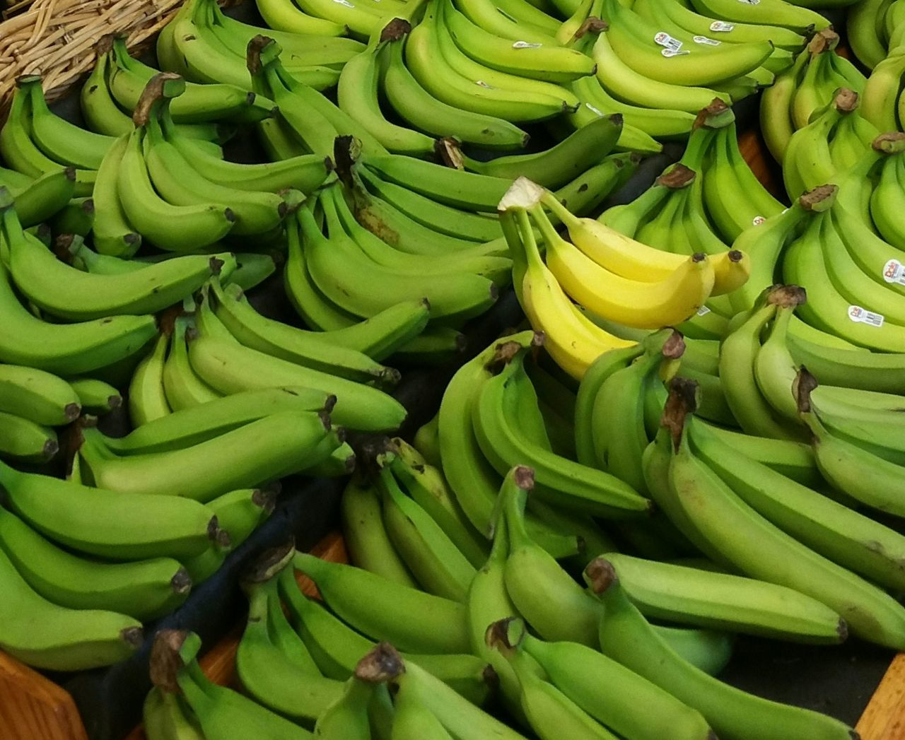 banana, food and drink, green color, fruit, food, no people, for sale, banana tree, healthy eating, freshness, market, day, outdoors