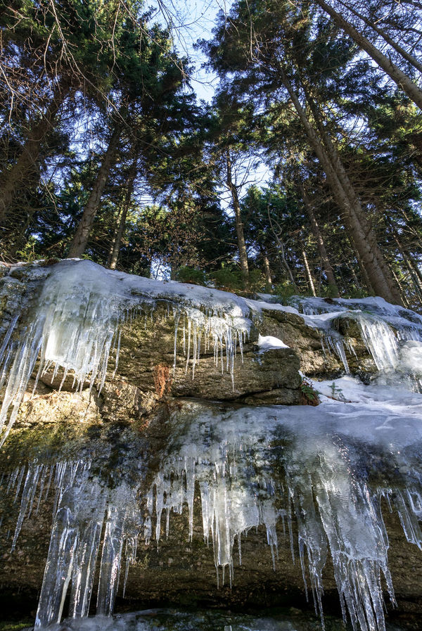 Icicles in Desnà, CZ Cold Temperature Czech Republic Desna Desna River Forest Photography Hiking Hikingadventures Ice Icicle Icicles Low Angle View Nature No People Outdoors Rock Tree Water Waterfall Winter Trees Wintertime