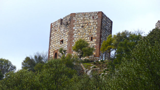 Castle in Monfragüe Ancient Architecture Building Exterior Built Structure Castle Clear Sky Damaged Day Deterioration Fort Growth Hill History Low Angle View Medieval Nature Old Old Ruin Outdoors Ruined Sky The Past Tower Tranquility Tree
