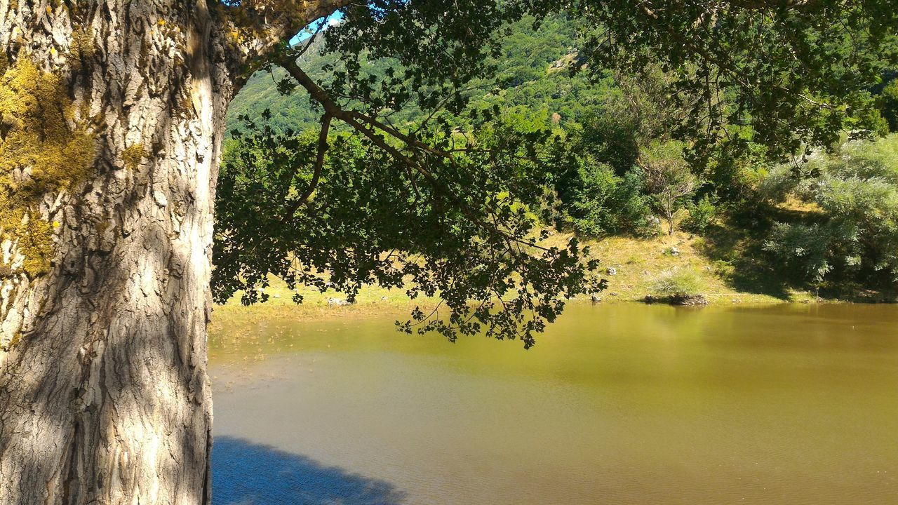 tree, nature, growth, beauty in nature, day, outdoors, tree trunk, no people, lake, tranquility, tranquil scene, water, scenics, landscape, sky