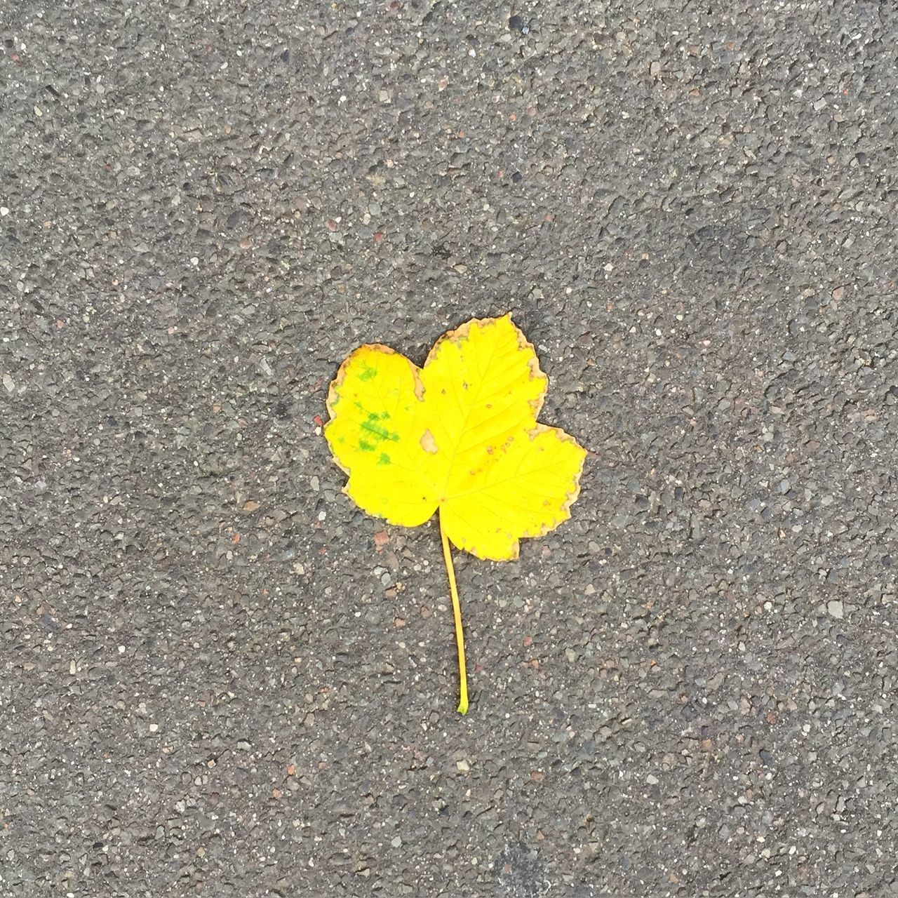 Close-Up Of Yellow Leaf On Ground