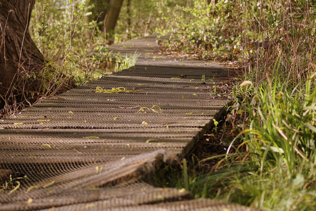 Beautiful stock photos of path, Close-Up, Day, Green, Long