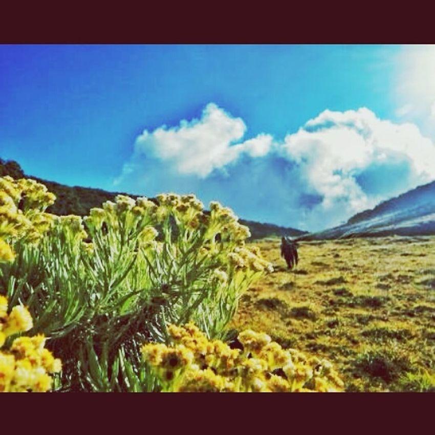 Indah mt.gede west java Mountain Top Mt.gede KebunRayaCibodas🌺❄ Tnggp Beautiful Indonesia Natural Mountain View Eiger