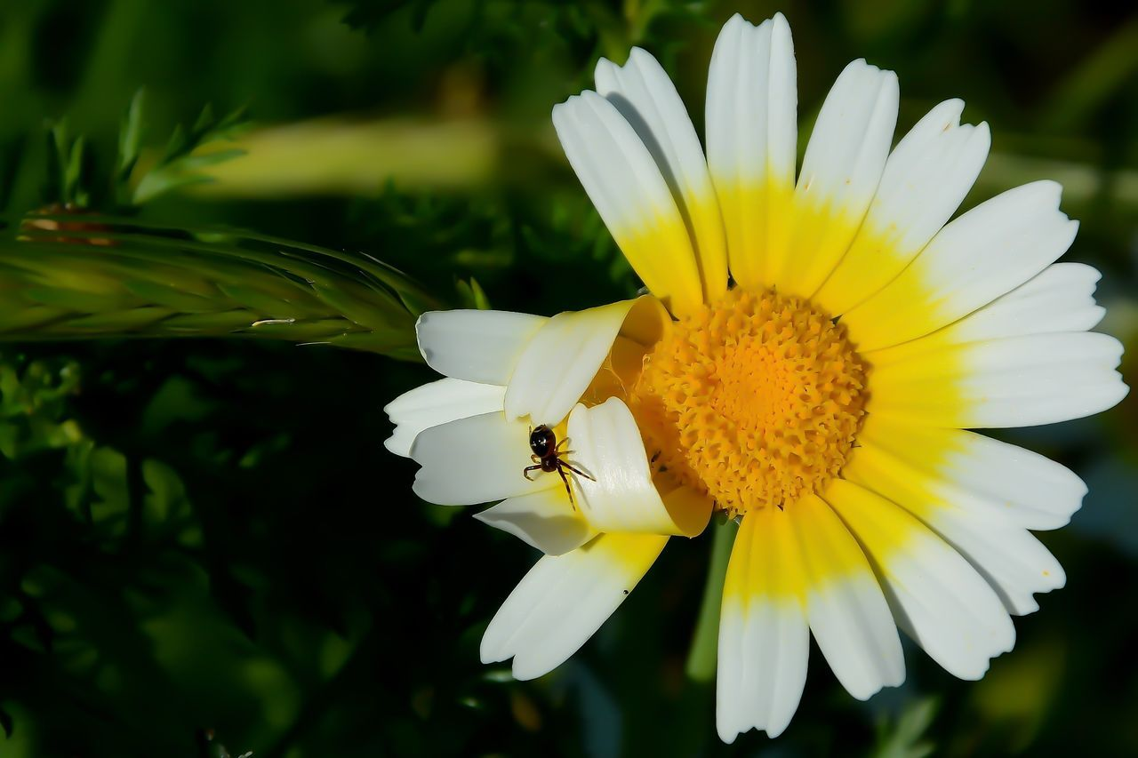 Spider Animal Themes Animal Wildlife Animals In The Wild Beauty In Nature Close-up Day Flower Flower Head Fragility Freshness Nature One Animal Outdoors Petal Yellow