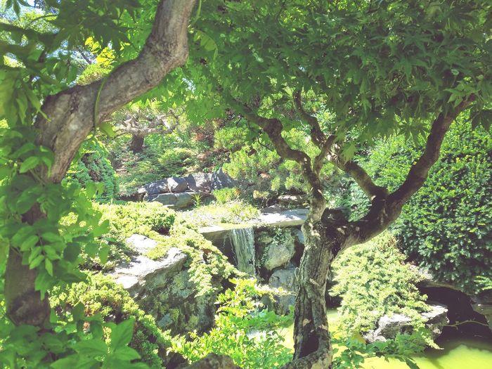 -Japanese Garden- Brooklyn Botanical Garden Garden And Waterfall Nature Photography Trees Green Color