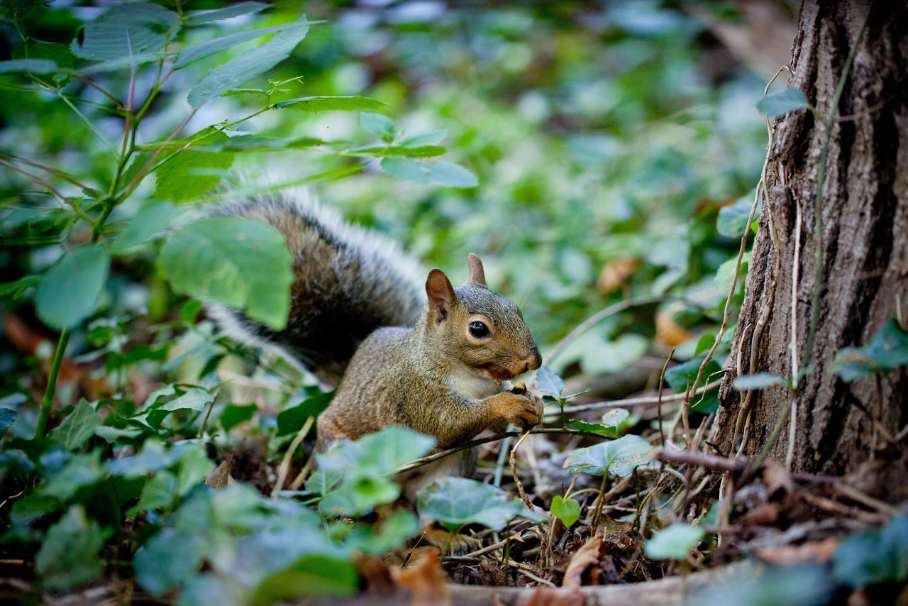 Beautiful stock photos of squirrel, Animal Themes, Animals In The Wild, Canada, Day