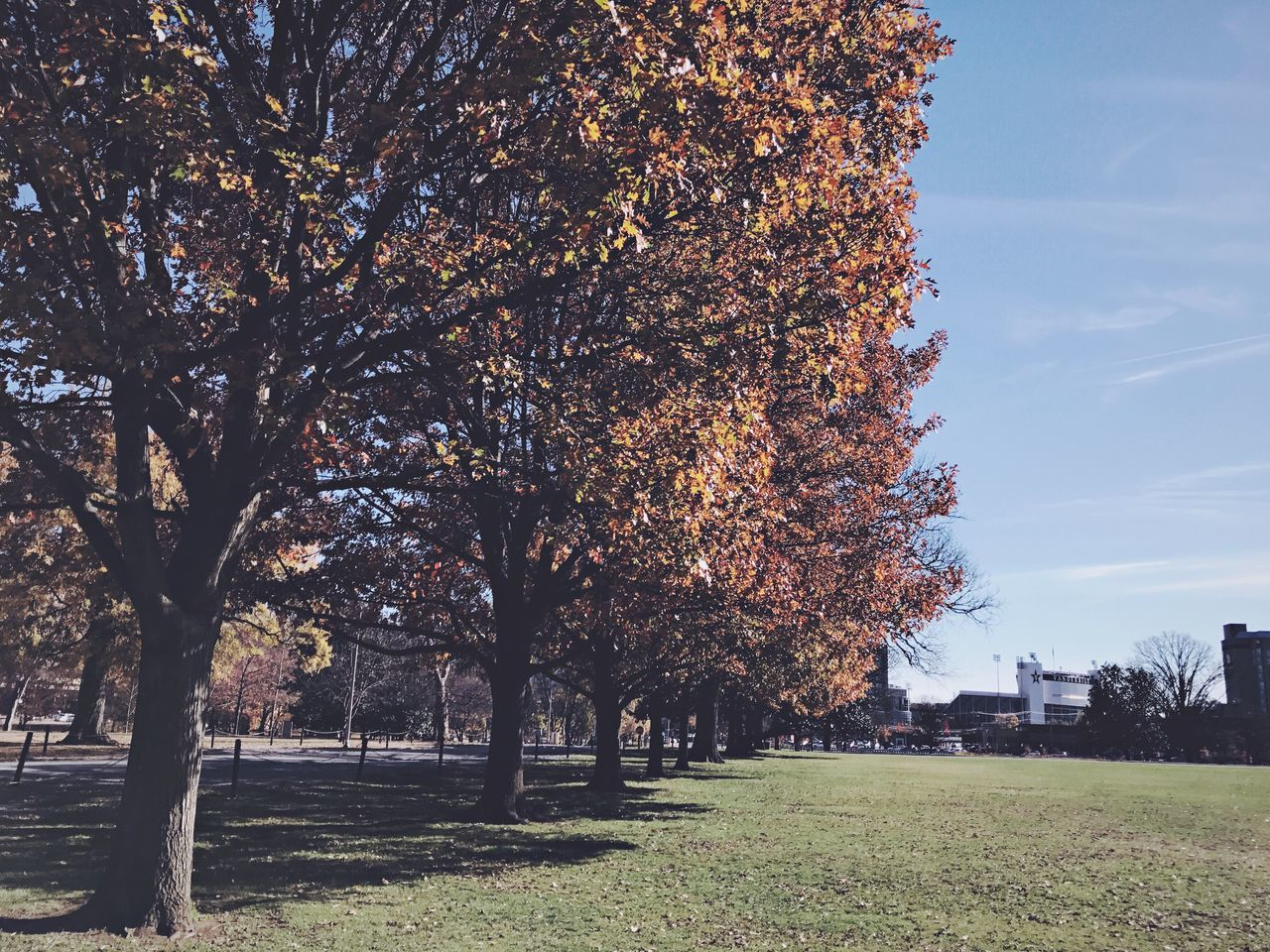 Tree Growth Nature Beauty In Nature Outdoors No People Change Branch Building Exterior Built Structure Autumn Grass Blossom Architecture City Scenics Day Sky Nashville Parthenon