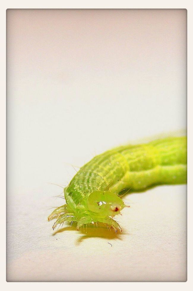 Macrophotography Insects  Nature Green