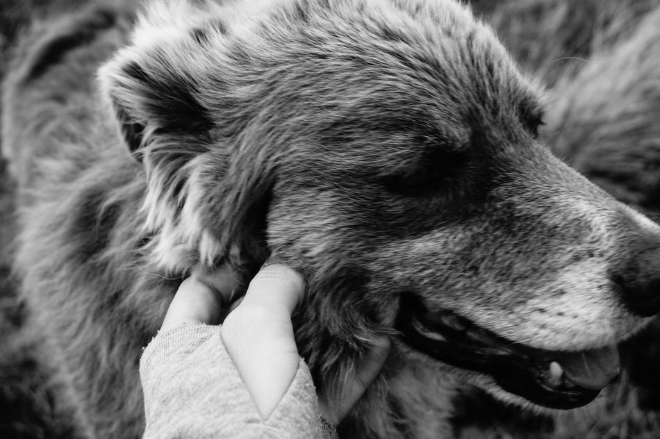 Dog Walking Around Chainedespuys Sweet Moments Blackandwhite Photography Blackandwhite Monochrome Photography My Year My View