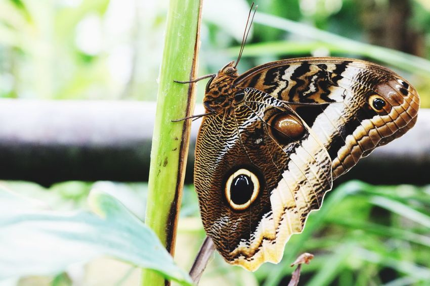 Butterflies are self propelled flowers. –R.H. Heinlein. One Animal Nature Insect Butterfly Butterfly - Insect Animal Themes Beauty In Nature