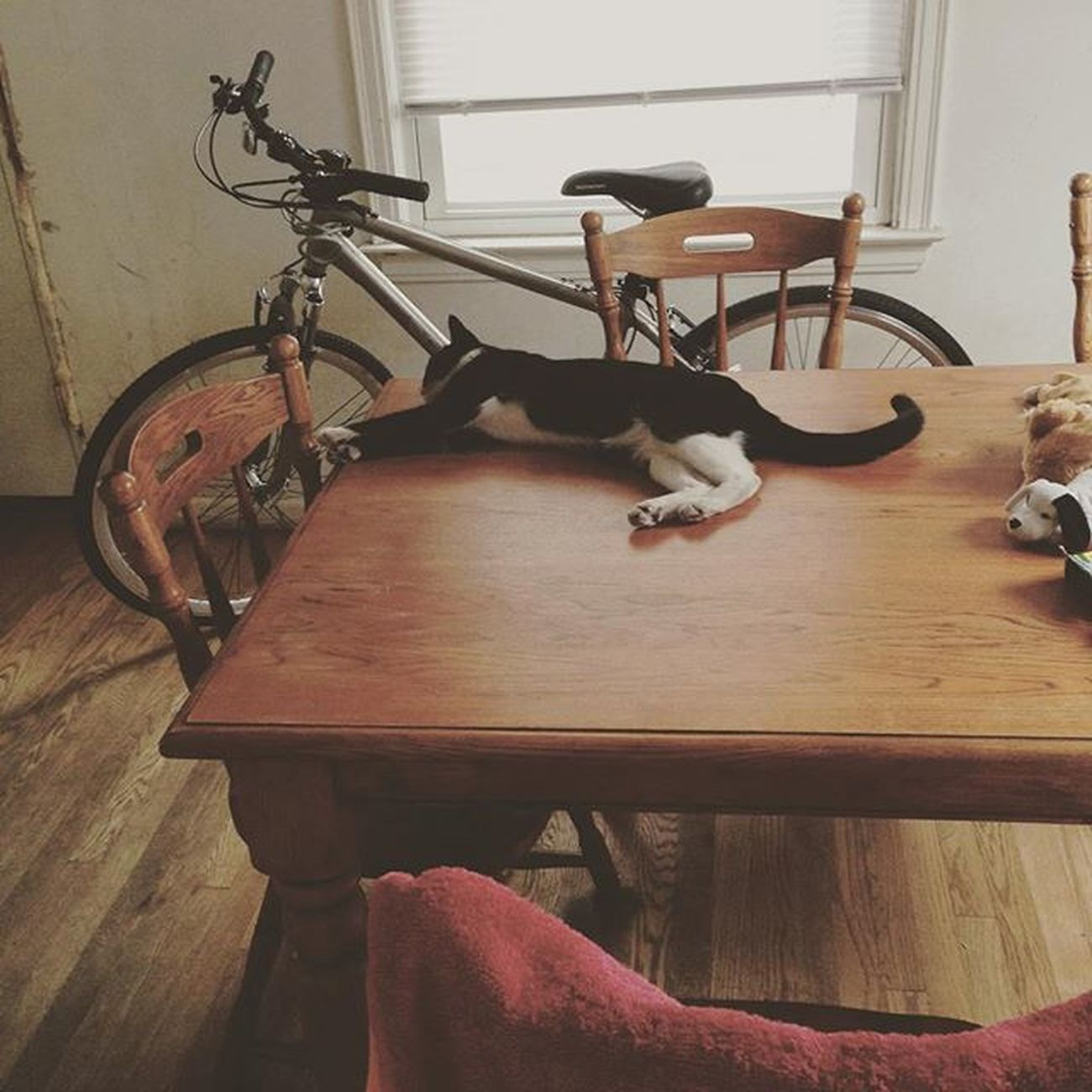 Best view ever. ❤️ she went missing last night and I wouldn't sleep until I found her. She was found at 3 am, and that's why I didn't sleep well. ( she's not allowed on the table ) Cat Cute Messytable Bike Blackandwhitecat Waslost Nowimfound Kitty Meow Aly_washere Dj