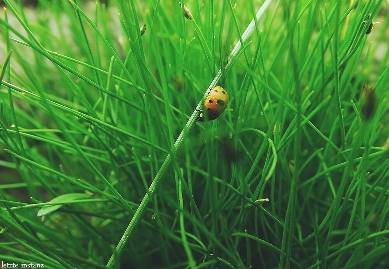 Plants 🌱 Забайкалье Nature Transbaikalia Grass Summer Green Color Insect Ladybeetle