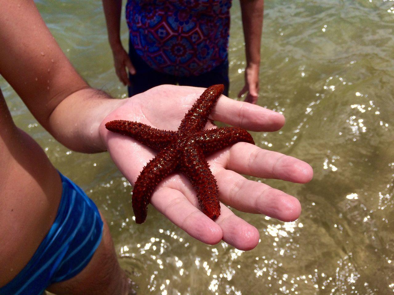 Estrela Estrela Do Mar Praia Ocean Brazil Brasil Vacation