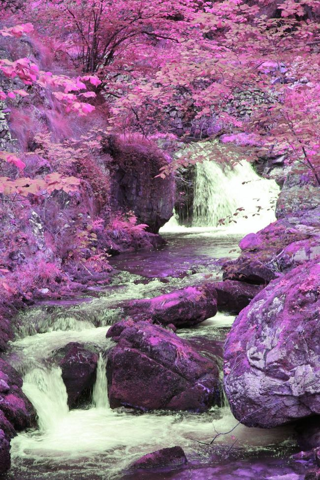 FANTASYWORLD Fantasy Dreaming Wonderland Another World Dreamland DreamScapes Fantastic Dreaming Dreams Come True Imaginary Landscapes Fantasy Nature Landscape Water Fantastic Landscape Surreal Alice In Wonderland Fantasy Photography Fantasy Edits Infrared Taking Photos Wonderworld Fantasy World Dreams Thisismyworld