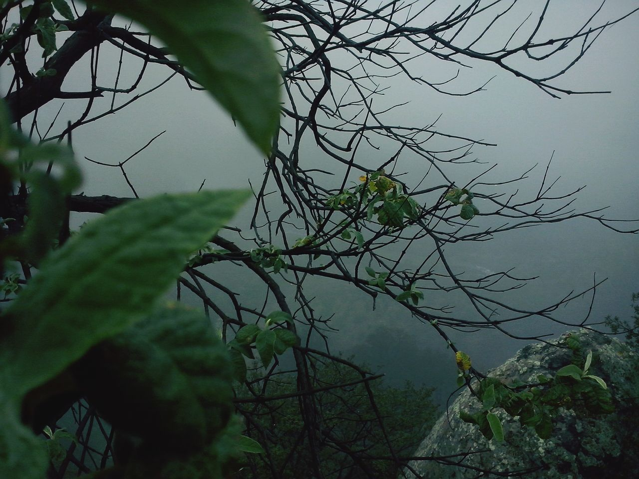 branch, growth, leaf, tree, nature, focus on foreground, close-up, plant, tranquility, sky, beauty in nature, twig, outdoors, no people, green color, day, low angle view, silhouette, scenics, forest
