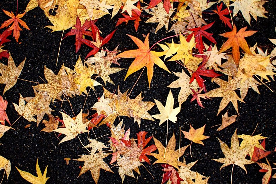 Autumn / Autumn Colors Autum Autumn Collection Foglie Nature Nature_collection Nautral  Season