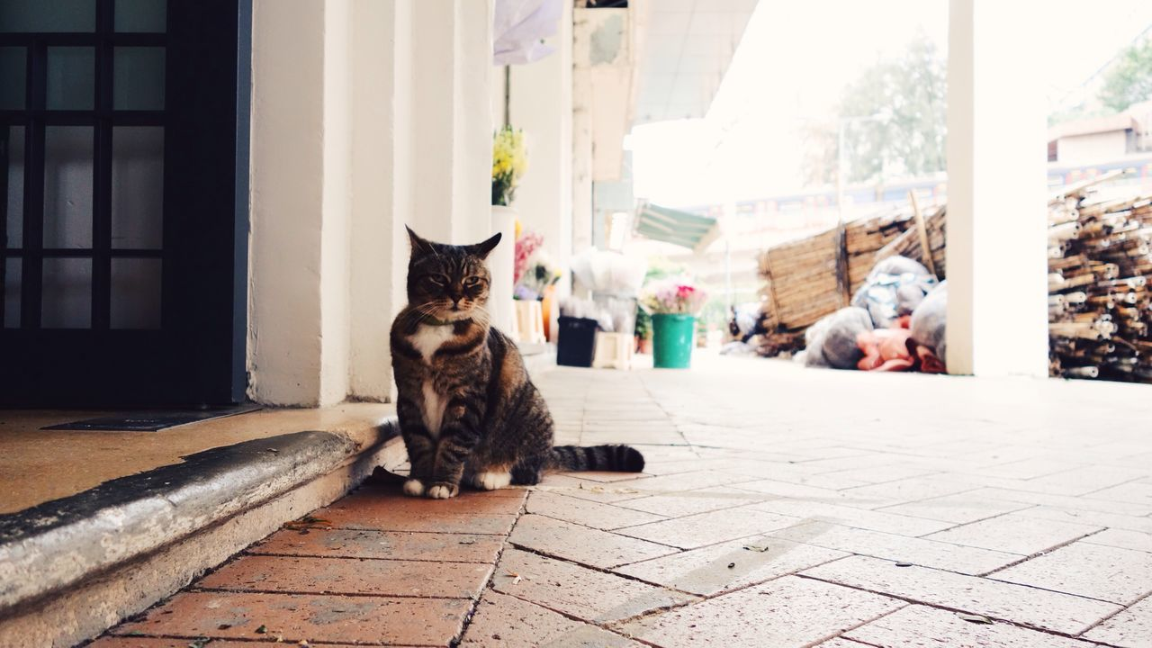 Cat Street Cat Street Fur HongKong Hong Kong Animal Pet ASIA China Ground Ground Level View City Urban