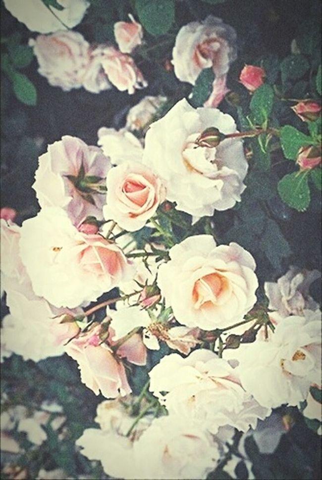 Vintage Flowers 😍😻🌸🌺🌷🌹 Vintage Vintage Filter Garden Roses, Flowers, Nature, Garden, Bouquet, Love,