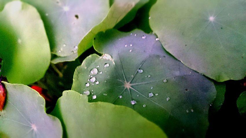 EyeEm Nature Lover Details Dew EyeEm Best Shots