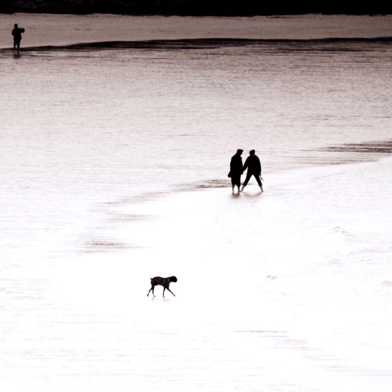 Beach Walk Sea Monochrome