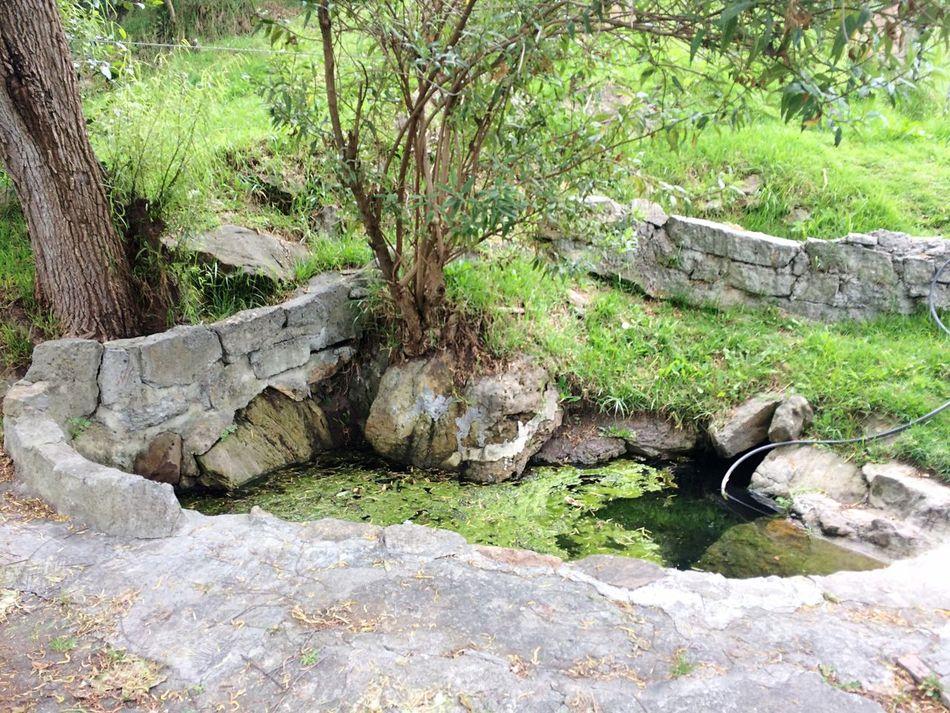 Nature lavado de soratama Cantera aula ambiental CerrosOrientales Bogotá a 2.900 Metros de Altura , Caminata ( Guaricha ) Mirador First Eyeem Photo