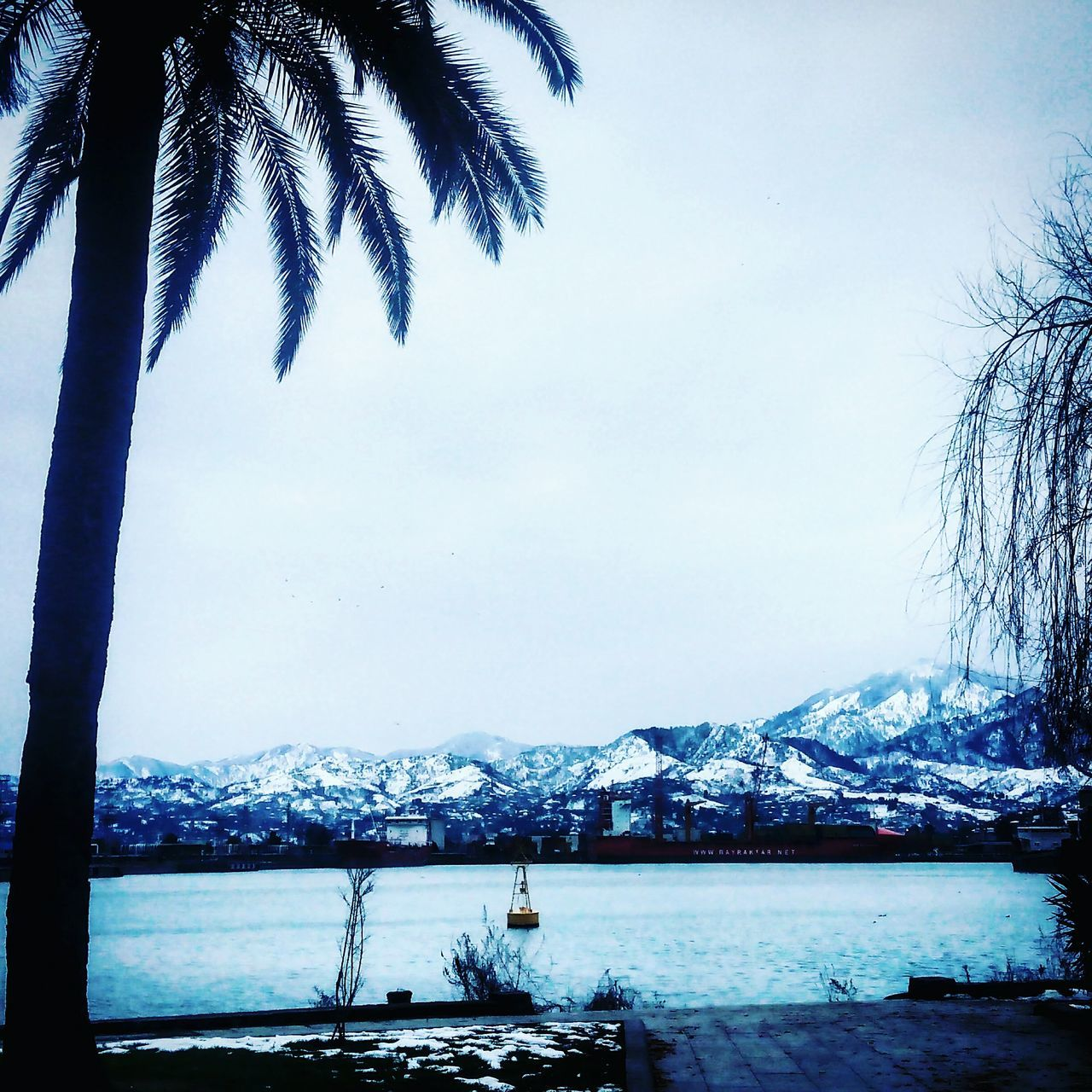 snow, tree, scenics, winter, mountain, beauty in nature, nature, cold temperature, tranquil scene, water, palm tree, tranquility, outdoors, day, sky, no people, mountain range, travel destinations, vacations, landscape