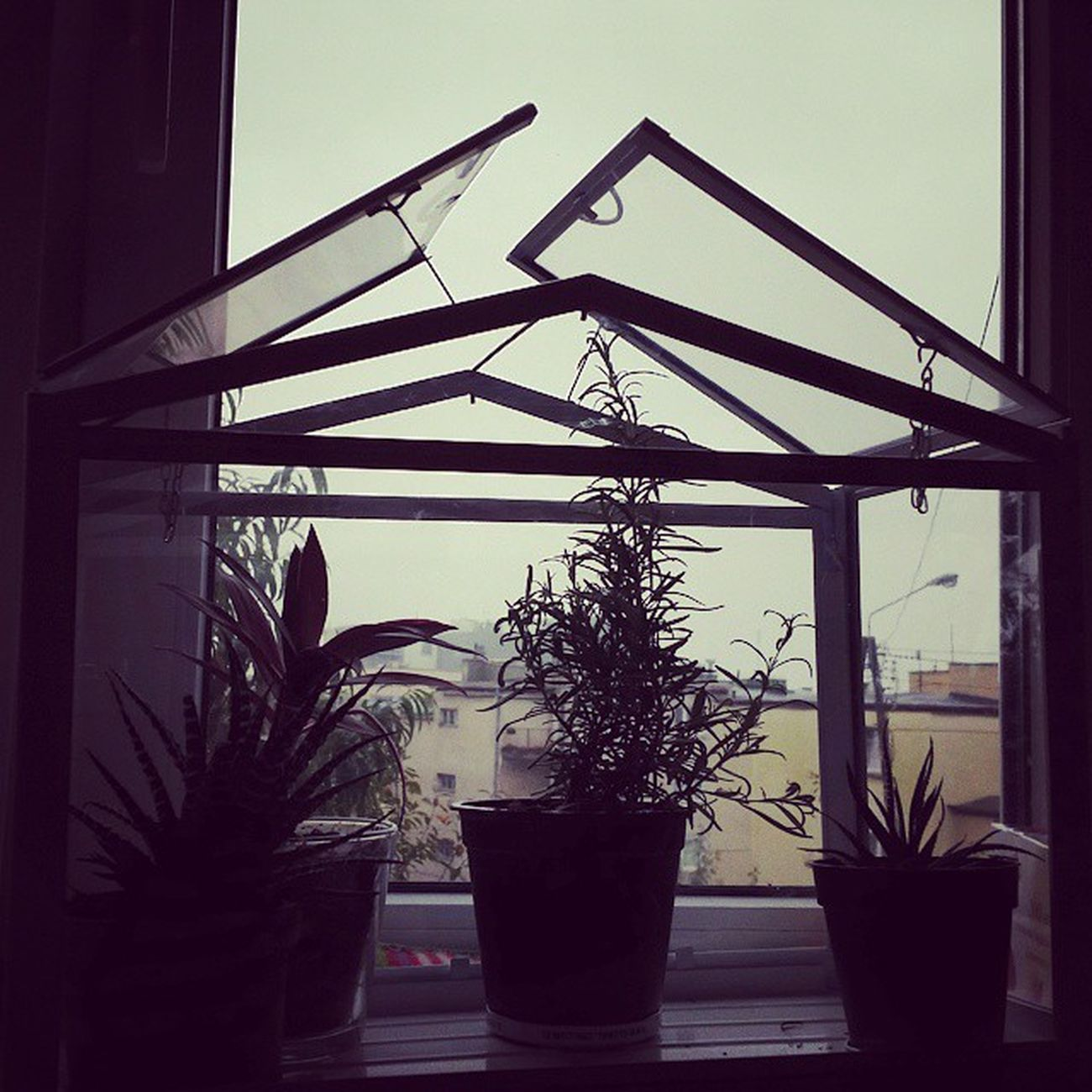 Greenhouse Plants Openroof Window rain fall Gdynia