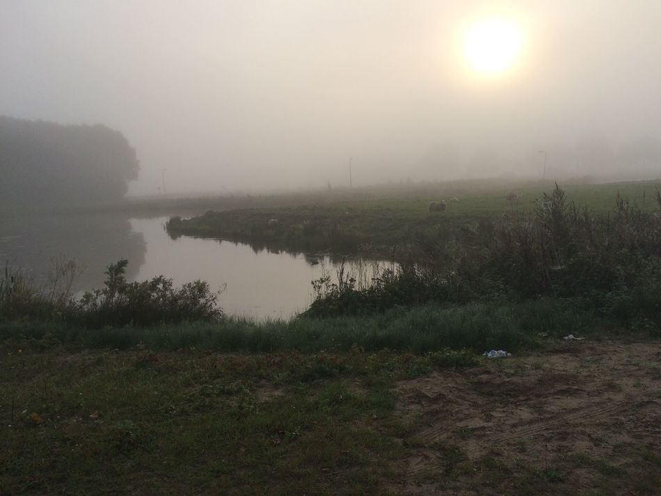 Beauty In Nature Day Fog Hazy  Lambs Landscape Nature No People Outdoors Scenics Sheeps Silence Of The Night Sky Sun Tranquil Scene Tranquility Tree Water