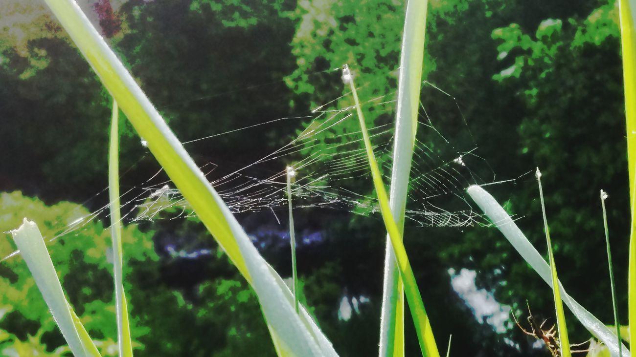I Hate Spiders Cheese! 😚 Mai 2016 Hello World Lovely Weather Natur Pur :)  Sunny Morning