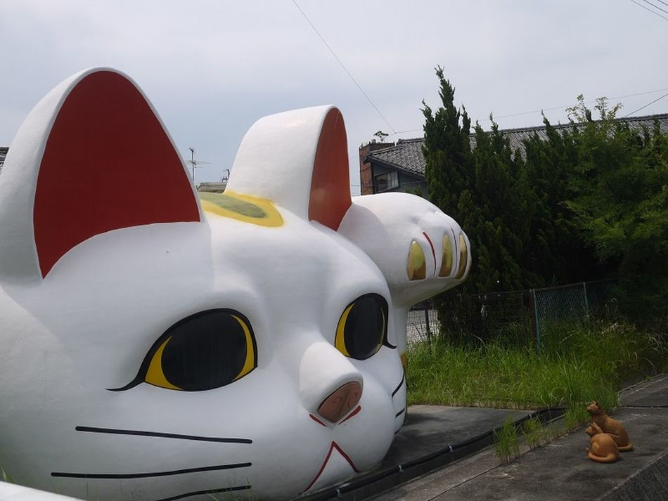 Beckoning Cat Cat Japan Photography Japanese Traditional 常滑 招き猫 猫