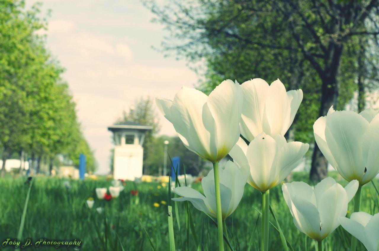 Wiese beim Checkpoint Harry DDR Grenze Flowers Blumen