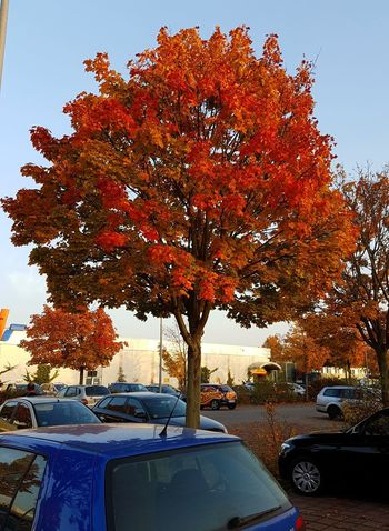 Car Tree Day Outdoors Sky City Autumn🍁🍁🍁 Beauty In Nature Red Red Leafs Colourful Sunshining