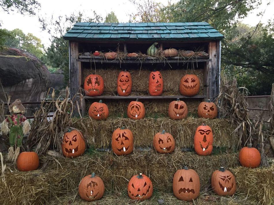 Beautiful stock photos of halloween, Anthropomorphic Face, Celebration Event, Creativity, Cultures