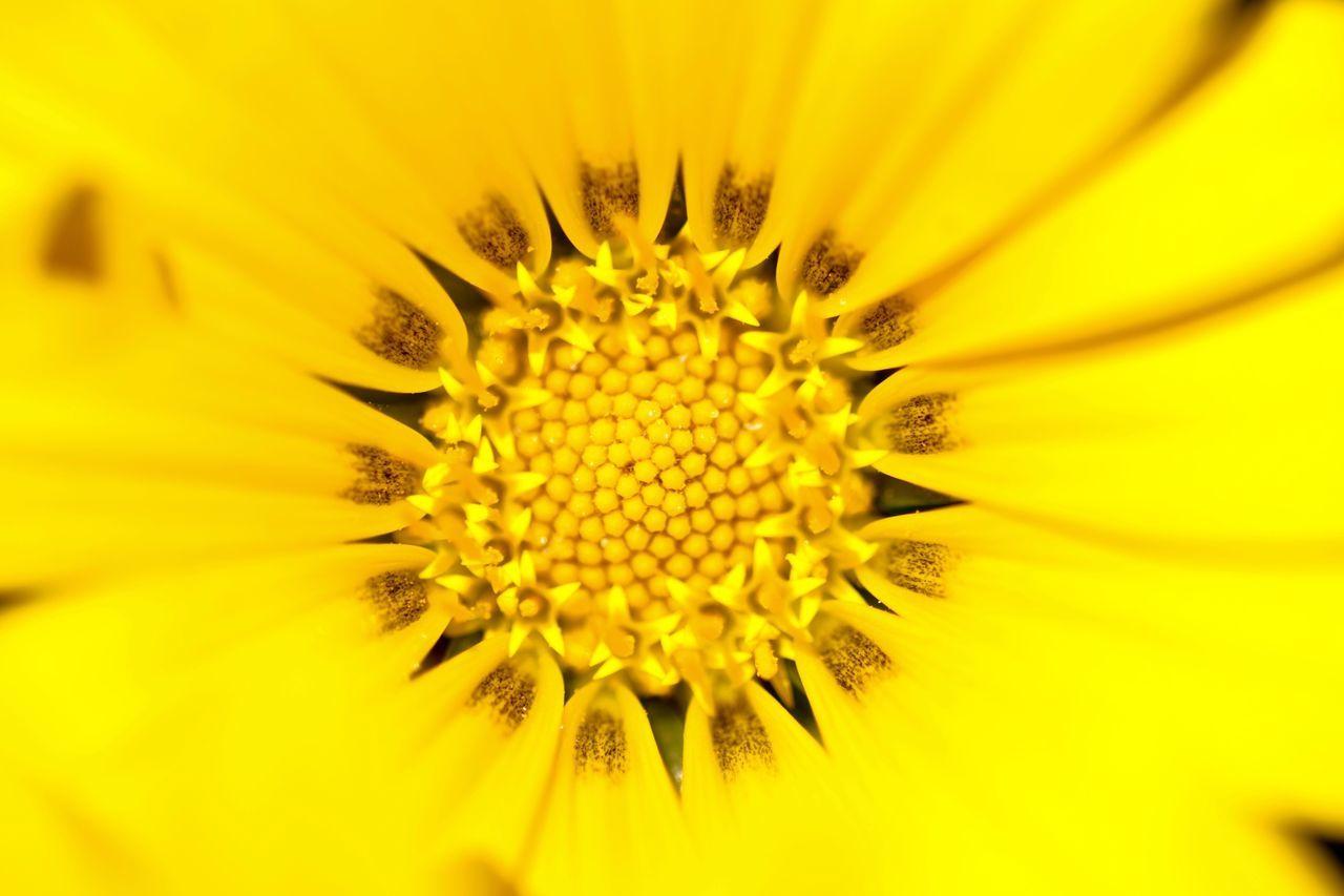 MACRO SHOT OF YELLOW FLOWER