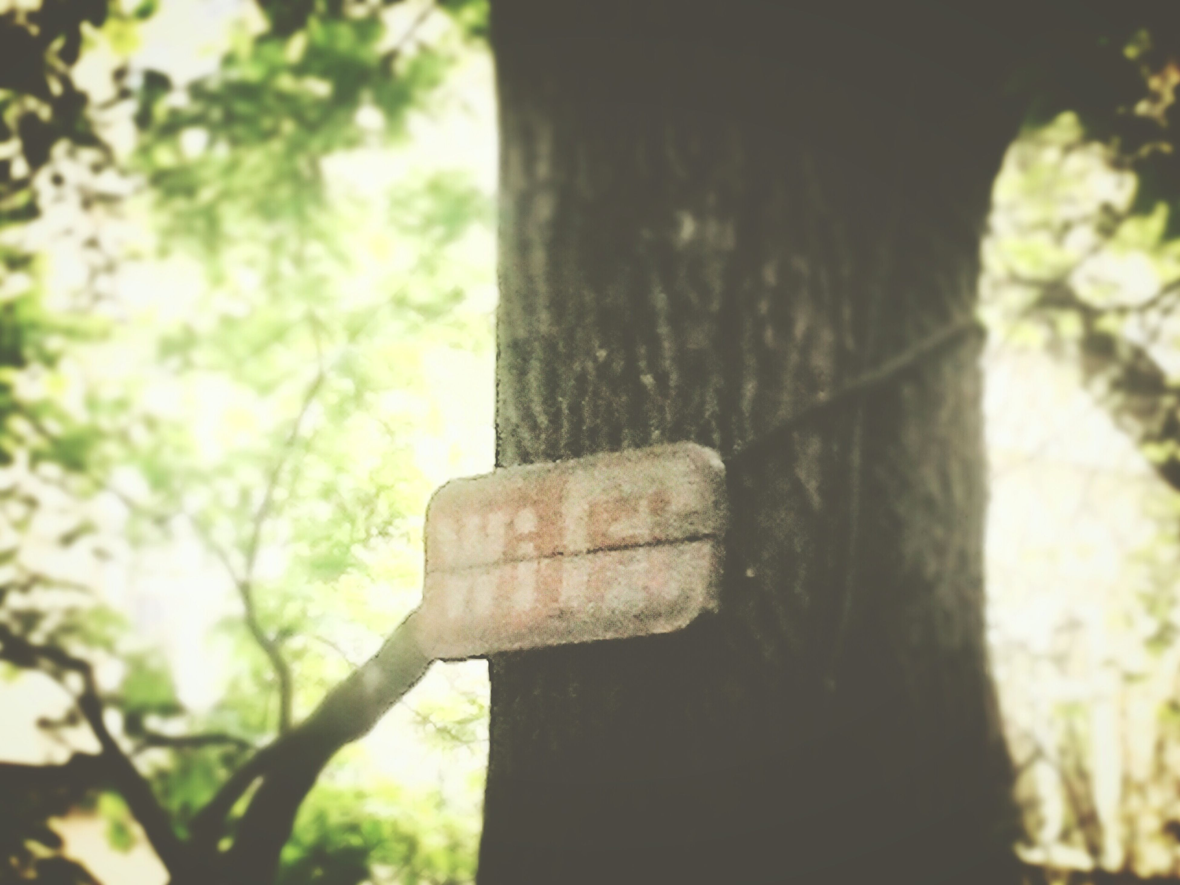 tree, tree trunk, focus on foreground, wood - material, close-up, branch, low angle view, growth, day, sunlight, no people, selective focus, nature, outdoors, forest, textured, old, wooden, part of, tranquility