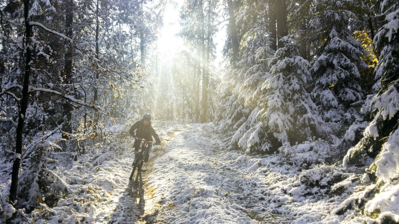 Mountainbiking in Hamburg Tree Nature Winter Outdoors Cold Temperature Urban Life City Life Hamburg Harburger Berge Forestphotography Woods Christmas Around The World Christmas Is Coming Winter Landscape Winteriscoming Mountainbiking Mountainbikelife Mountainbike People Mountainbiker Sunbreak Sunbreakingthrough Beauty In Nature Winter Wintersports