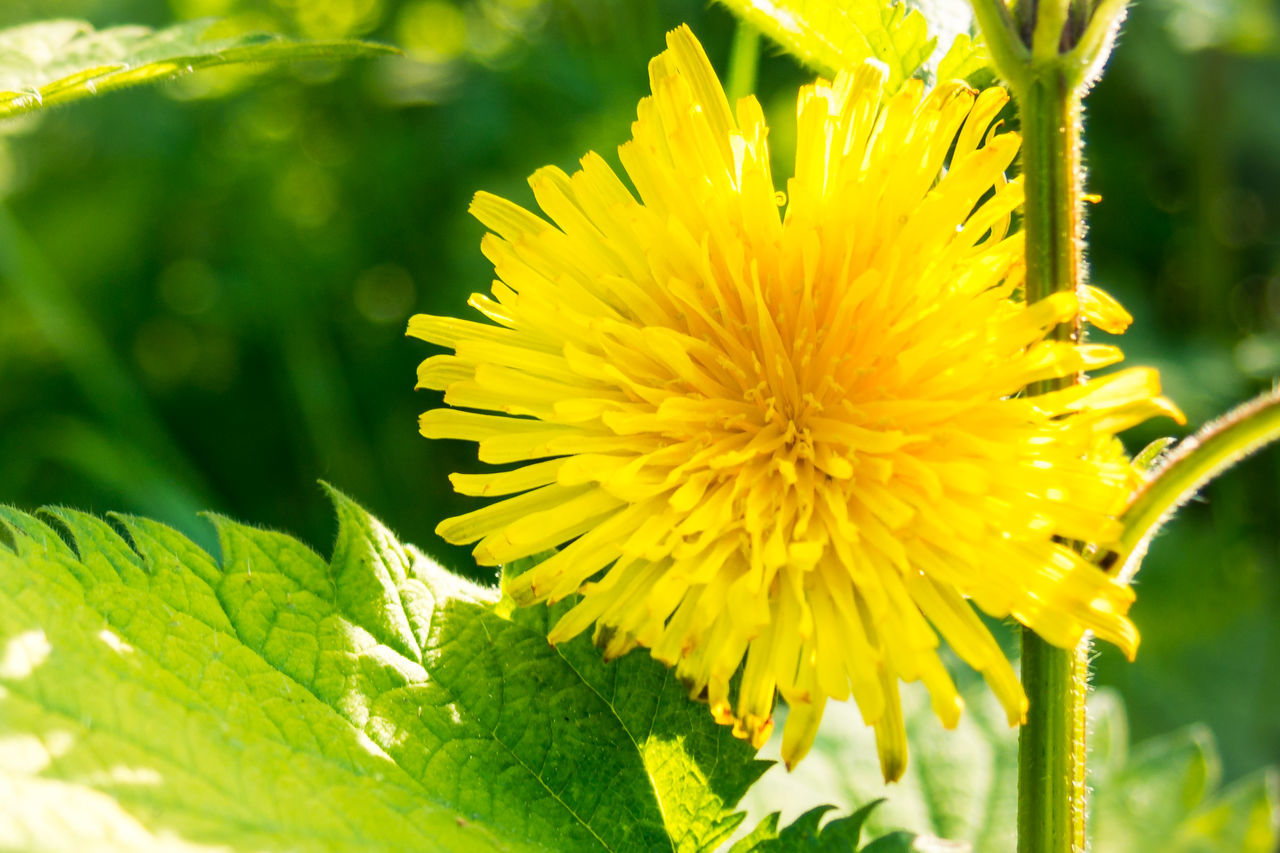 flower, growth, yellow, beauty in nature, nature, fragility, freshness, plant, petal, close-up, flower head, green color, day, no people, leaf, outdoors, blooming, springtime