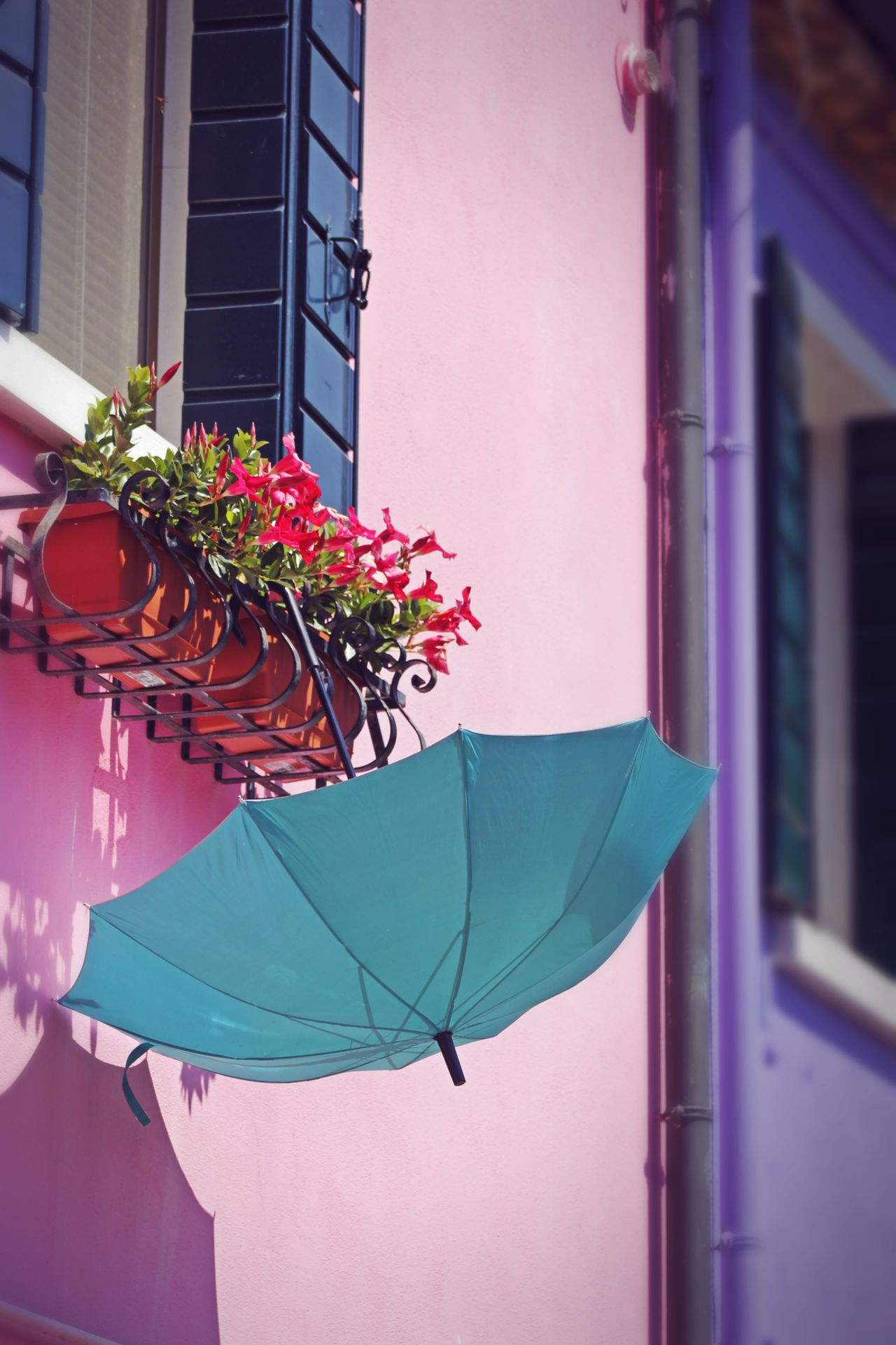 Architecture Building Exterior Built Structure City Day Flower Freshness Growth Nature No People Outdoors Plant Unbrella Venice, Italy Window Box The City Light EyeEmNewHere