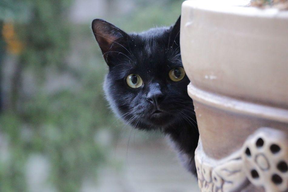 Beautiful stock photos of ankara, Alertness, Animal Themes, Ankara, Black Color