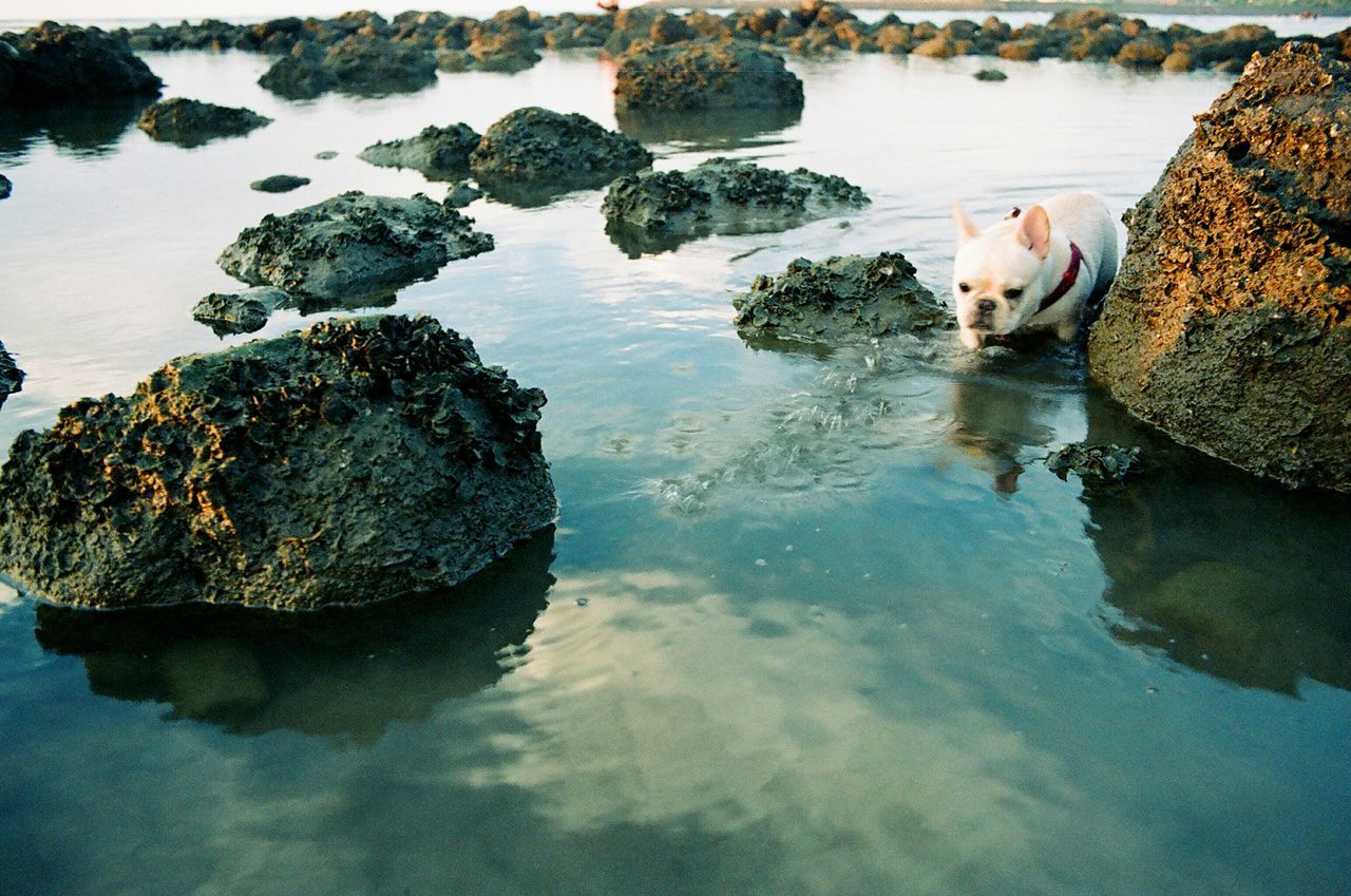 Water Reflections Frenchbulldog Getting In Touch Life Is A Beach Snapshots Of Life Film Is Not Dead Film Photography 35mm Film Nikon Fm10 Pets Corner 鐵蛋