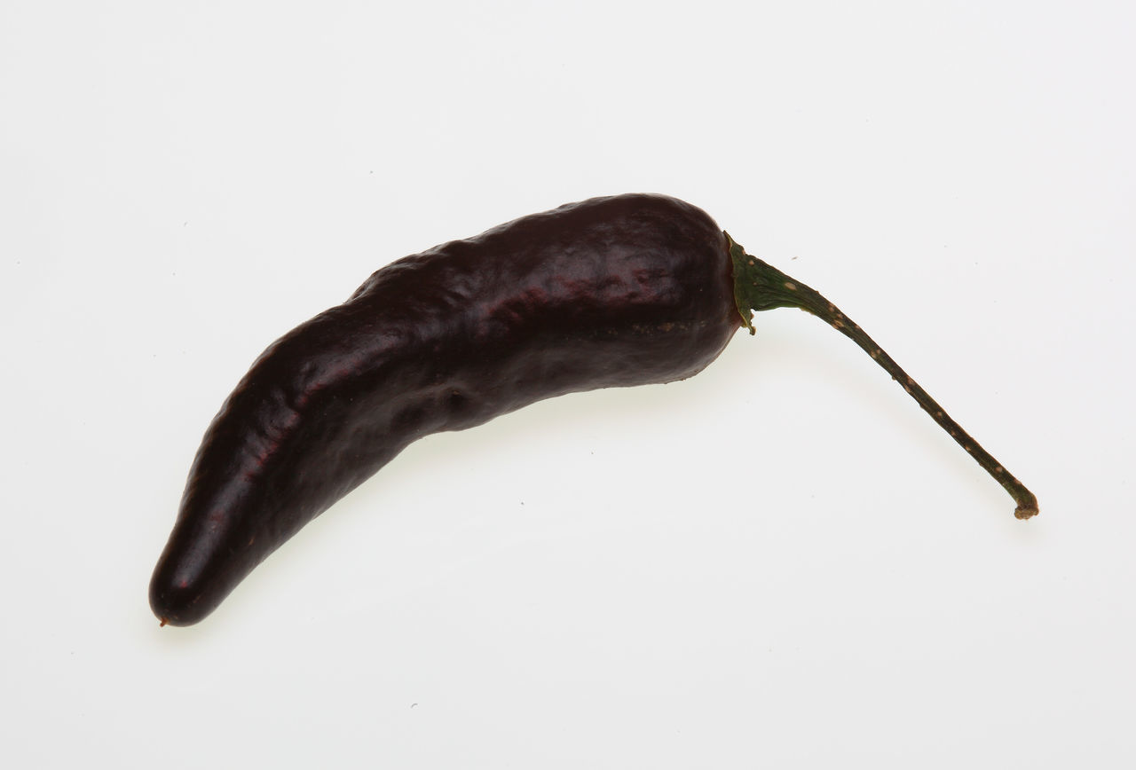 Pimenta da Neyde black Chili, chili pepper, Capsicum annuum Black Capsicum Chili  Chili Pepper Chilipeppers No People Pimenta White Background