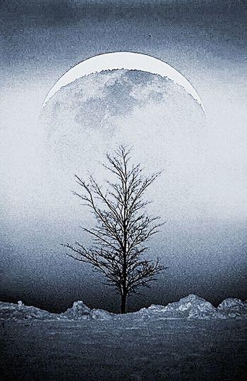 Overnight Success Itree Branch Night Illuminated