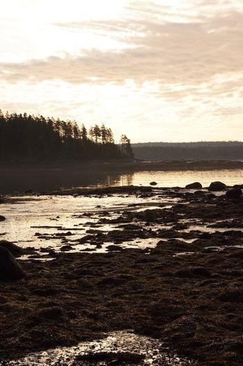 Maine Nature Sunrise Landscape