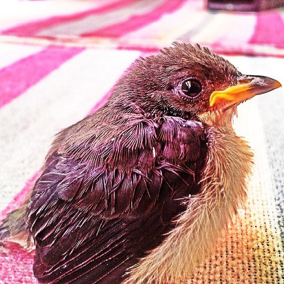 Fledgling. Bird Ibon Aves Samsung phonephotography samsungasia natgeo nature animal animalkingdom fledgling nationalgeographic itsmorefuninthephilippines wowphilippines