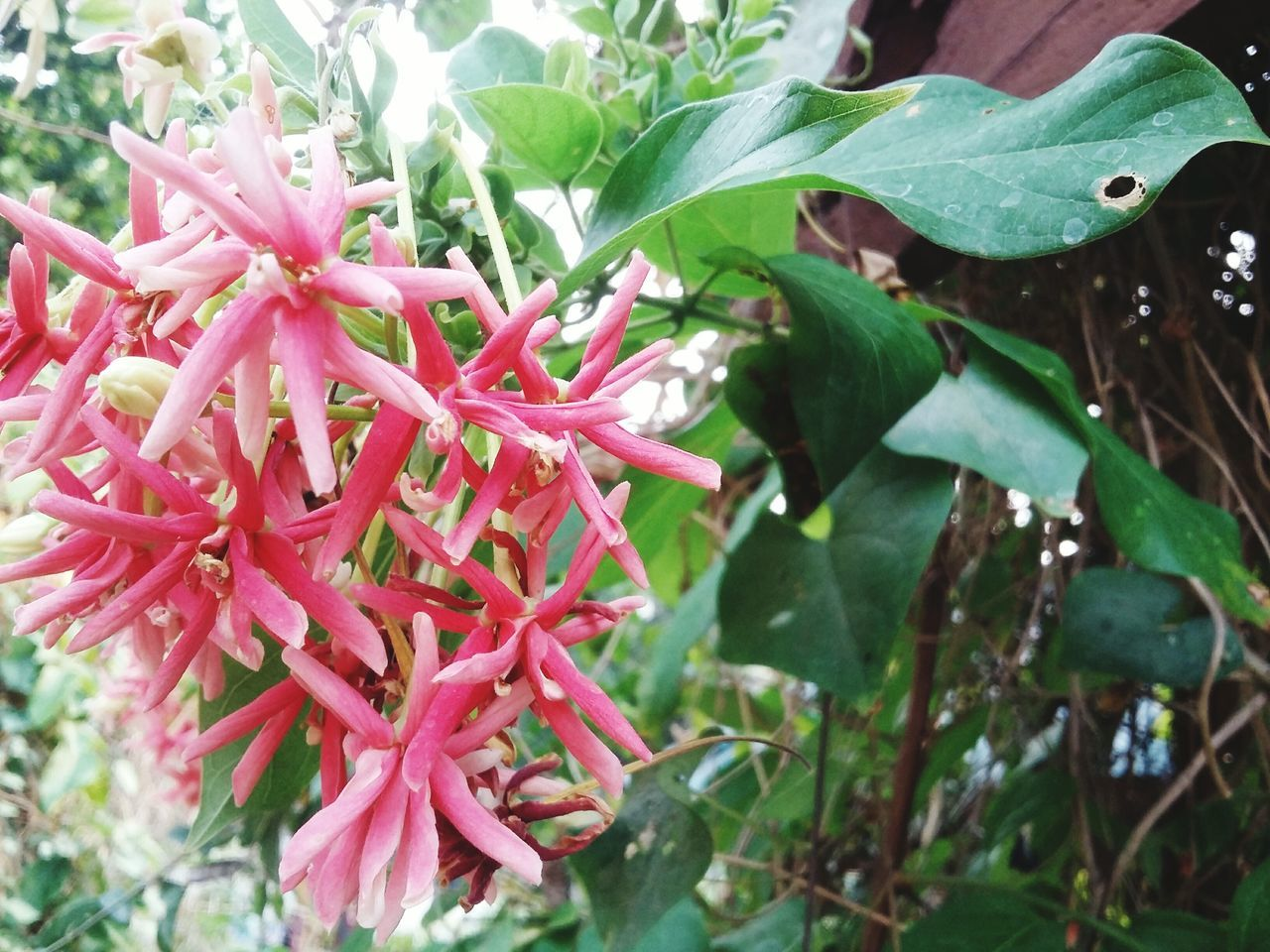 growth, nature, red, plant, outdoors, day, beauty in nature, leaf, fragility, petal, freshness, no people, close-up, flower head, flower, blooming, water