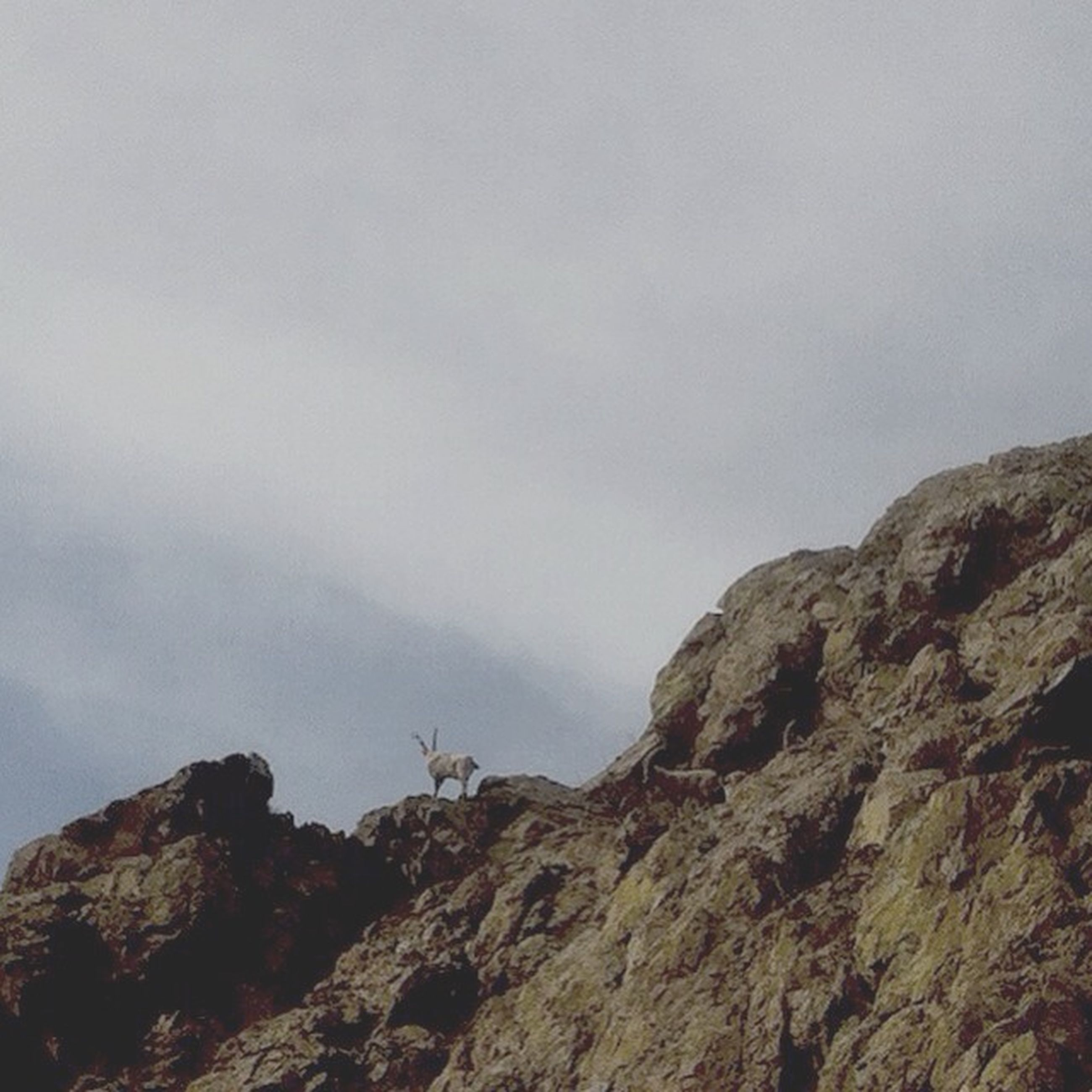 rock - object, sky, low angle view, tranquility, rock formation, mountain, nature, tranquil scene, scenics, beauty in nature, rock, rough, rocky mountains, day, outdoors, rocky, cloud - sky, geology, cliff, idyllic